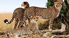 Itinerary-Masai-Mara