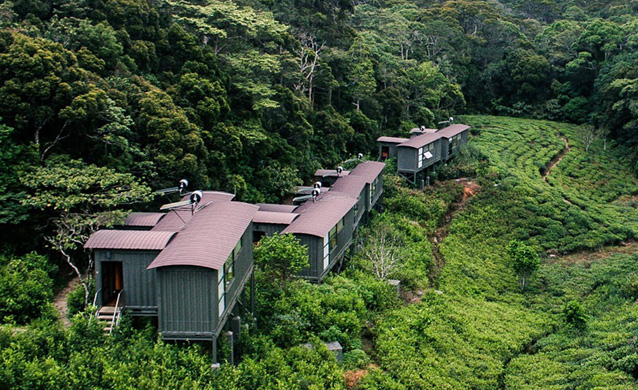 The Rainforest Ecolodge Sinharaja