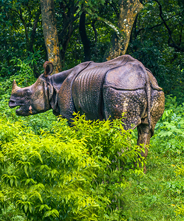 Chitwan-National-Park-02