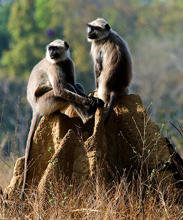 Kanha-National-Park-01