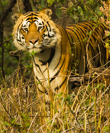 Kanha-National-Park-03