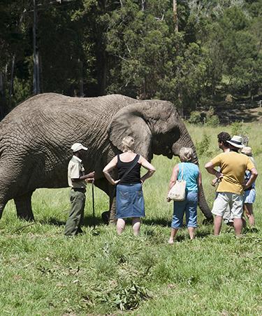 Knysna-Elephant-Park-01
