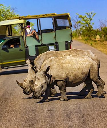 kruger-national-park-south-africa-02