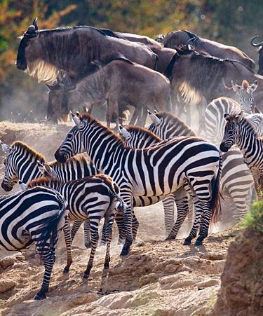 Maasai-Mara-01