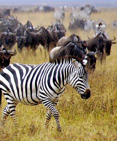 Nairobi-National-Park-01