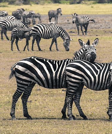 Nairobi-National-Park-03