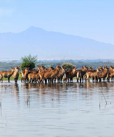 Naivasha-National-Park