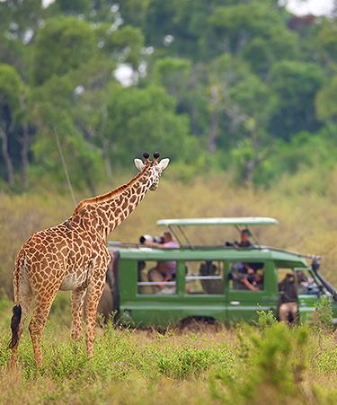 Serengeti-01