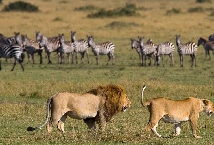 masai-mara-05