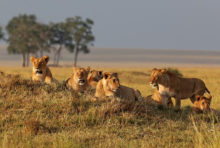 masai-mara-06